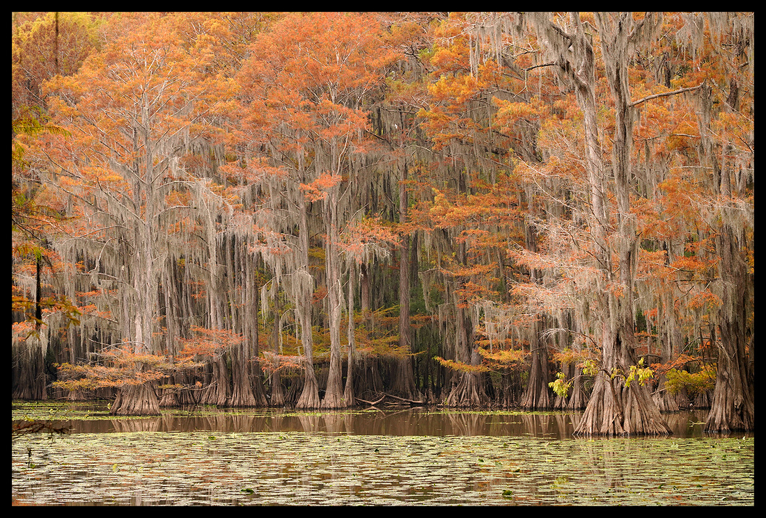 TX, Cypress trees 16