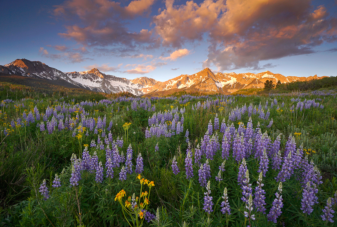 San Juans and lupines 8, CO