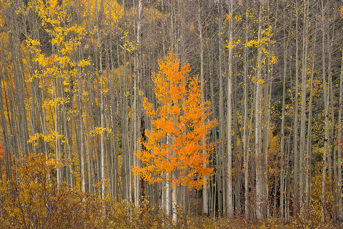 Fall Colors 16, CO
