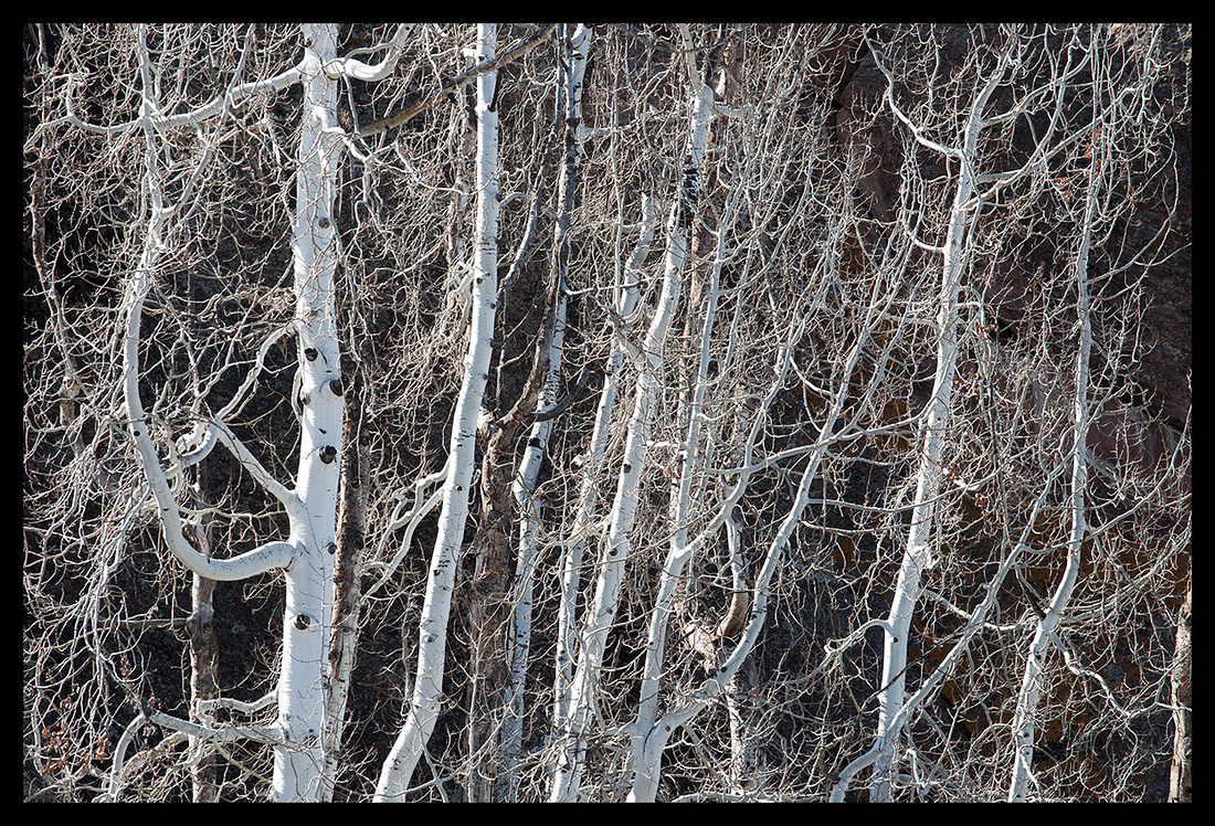 Winter aspens horizontal