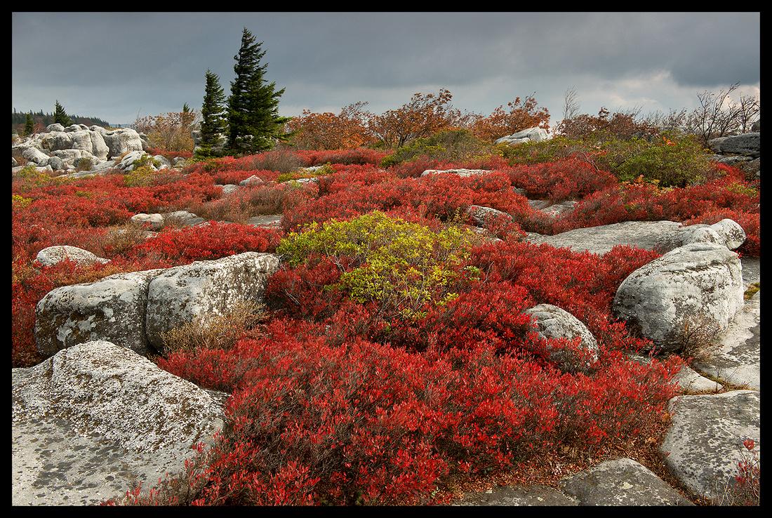 Bear Rocks Preserve 1