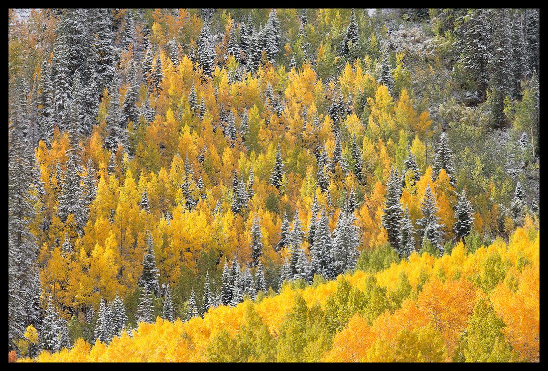 Fall colors 2, CO