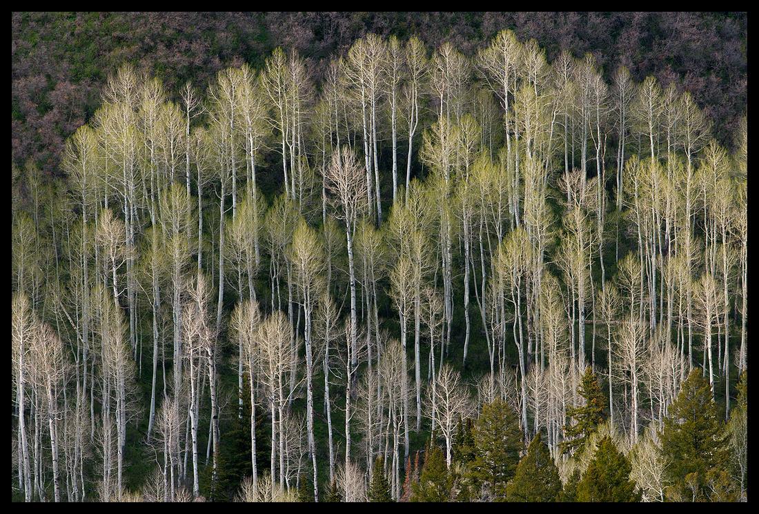 Owl Creek Pass 1, CO (2)