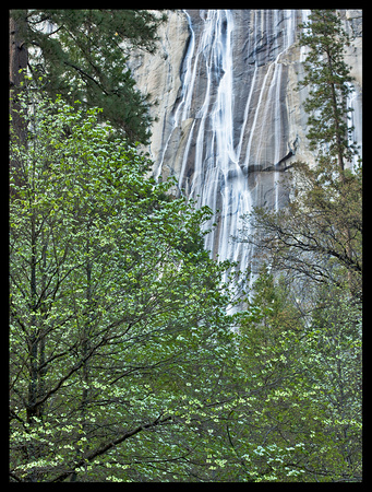 Yosemite N.P. - Dogwood in bloom with falls