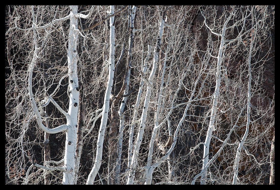 Winter aspens horizontal