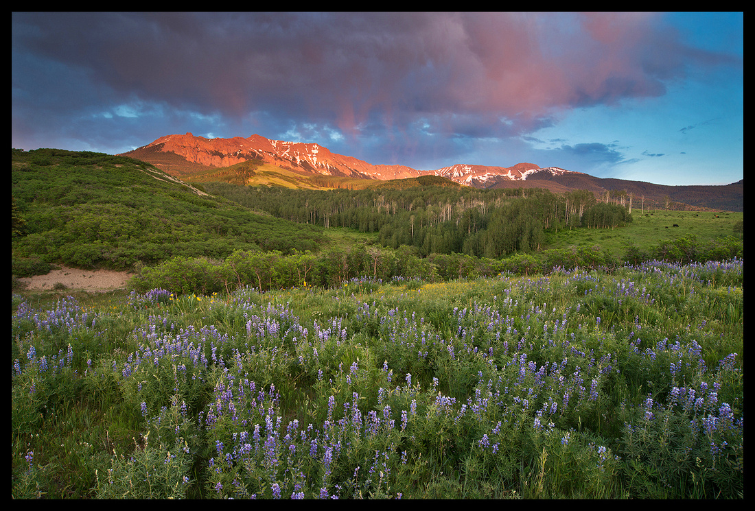San Juans and Lupine 2, CO