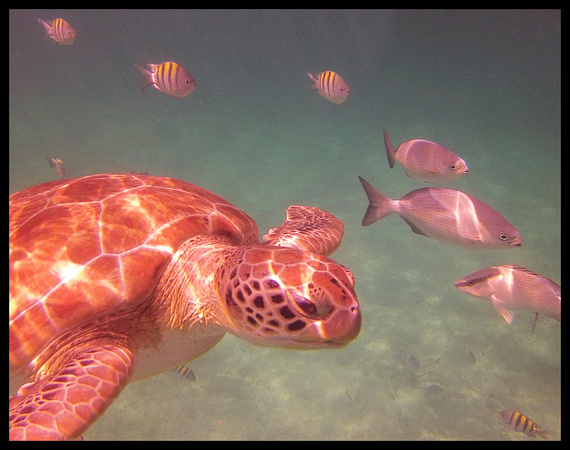 Belize turtle and fish